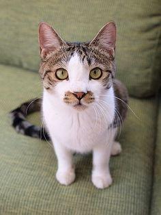 マロンの物語 feat.猫カフェ Cats-オットーくん