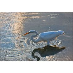 Great Egret in patterns, Photography on Canvas
