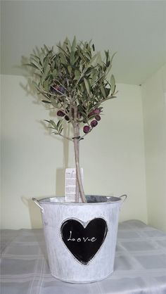 Love bucket & Olive Tree Best4Garden Online Garden Products Christmas Coal, Cool Gifts For Women, Olive Tree, Unique Presents, Romantic Gifts, Shabby Chic Style, Fruit Trees, Planter Pots, Best Gifts