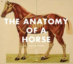 Great horse website.  Horse Anatomy Pictures-Think Like a Horse-Rick Gore Horsemanship ®