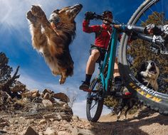 Flying dogs courtesy of gopro