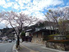 4月11日に撮った、鬼怒川パークホテルズ前の桜。