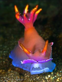 Nudibranch, also called Sea Slug Life Under The Sea, Under The Ocean, Sea And Ocean, Beautiful Sea Creatures, Deep Sea Creatures, Underwater Creatures, Underwater Life, Photo Animaliere, Beneath The Sea