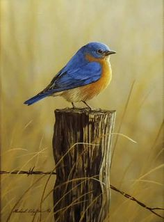 Bluebird on Fence Post - by Richard Clifton