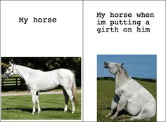 My horse. --> My horse when I'm putting a girth on him.