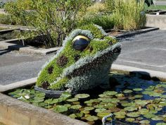 Frog in Lily Pond Plant Sculpture Topiary Art Garden - Modern Design Garden Frogs, Water Garden, Amazing Gardens, Beautiful Gardens, Topiary Garden, Pond Plants, Lily Pond, Plant Art, Yard Art