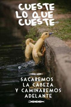 #Motivación #Palma Cueste lo que cueste