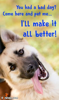 Having a bad day? Your dog will make it better!