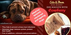 Flower Dog, Dog Bakery, Urinary Tract Infection, Dog Biscuits, Immune System, Health, Dogs, Health Care, Pet Dogs