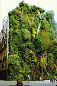 Vertical Rose Gardening The vertical garden in Madrid, designed by Patrick Blanc Vertical Gardens, Vertical Farming, Vertical Forest, Vertical Planting, Vertical City, Exterior, Earthship, Parcs, Oh The Places You'll Go