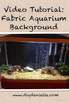 1000 Images About Pets On Pinterest Aquarium