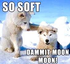 """Moon, Moon, """"So sof!"""" """"Damnit, Moon, Moon !"""""""