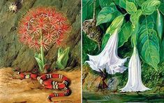 Marianne North: Flor imperiale, coral snake and spider, Brazil; Burning bush and the emu of Chile