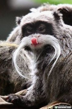 Very-Funny-Animal-Faces-3-320x480