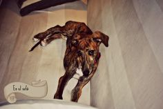 Hendrix al sofa 3 mesos