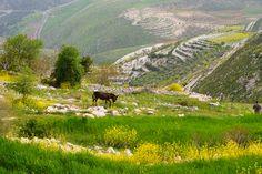 THE BEAUTY OF LEBANON - THE WEST BEKAA