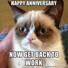 Grumpy Cat Quotes, Funny Grumpy Cat Memes, Funny Animal Jokes, Funny Cat Videos, Cute Funny Animals, Funny Animal Pictures, Animal Memes, Funny Cats, Funny Memes