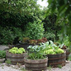 """Ein Schweizer Garten on Instagram: """"Die grösste Vorfreude im Frühling ist es, das erste knackige Gemüse zu ernten. Die Hochbeete aus alten Weinfässern stehen erst seit Herbst…"""" Urban Farming, Vegetable Garden, Beautiful Gardens, Vegetables, Instagram, Plants, Garden, Wine Cask, House"""
