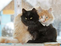 Amigos vasil-zlobin2011 — «Два брата.» на Яндекс.Фотках