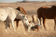 ABOUT THE PLIGHT OF THE AMERICAN WILD MUSTANG #SaveAmericasMustangs