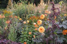 From Claus Dalbys own garden in Risskov, Denmark. Visit his blog - www.clausdalby.dk