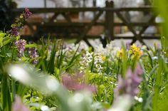 Tuin De Warande, Bostuin met stinzenplanten