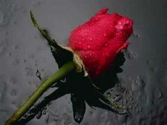 Ben E. King: There is a Rose in Spanish Harlem