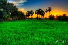 wpid20244-cambodgienne-Rice-Champ-cours-Sunset-in-Battambang.jpg