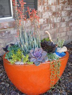 LOVE SUCCULENTS AS THIS....
