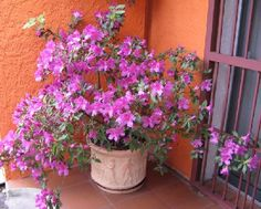Nomes-de-flores-para-jardins