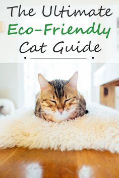 The ultimate guide on how to start your cat on an eco-friendly lifestyle. The easiest methods and organic products to help you and your cat live more environmentally friendly Green Life, Go Green, Conservation, Going Zero Waste, Sustainable Living, Sustainable Products, Eco Friendly House, Carbon Footprint, Biodegradable Products