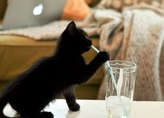 mama' says if i keep drinkin this special potion drink.....I'll grow up to be a scarry Halloween Cat!!!