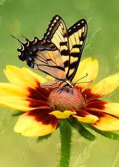 Butterfly by Nina Bradica