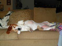Goofy Sophie sleeping.