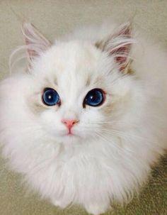 beeyootiful kitteh
