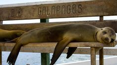 Sea Lion taking a snooze on the Galapagos Islands - Call Travel Connections at 815.780.8581 or visit us online at www.PeruTravelConnections.com!