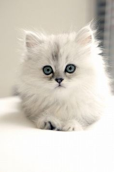 .I am not a cat person but this little kitten is absolutely adorable.