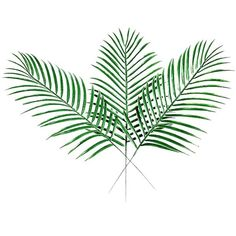 XHSP 40pcs Fake Faux Artificial Tropical Palm Leaves Green Single Leaf... (€24) ❤ liked on Polyvore featuring home, home decor, floral decor, tropical palm trees, faux palm tree, fake palm trees, artificial plants and faux palm