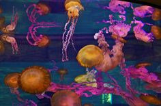Jellies at the Shark Reef