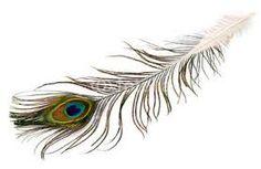 Afbeeldingsresultaat voor fotobehang pauw