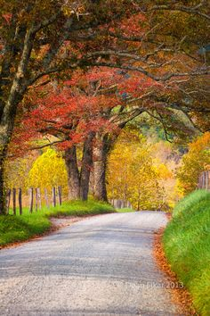 Fall foliage on display on Sparks Road (Cade's Cove, Great Smoky Mountains National Park, Tennessee) by Dean Fikar cr.c.