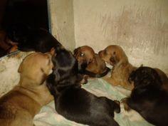Animals, Cagayan De Oro, Animales, Animaux, Animal, Animais