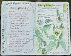 South Carolina Low Country Nature Journaling and Art: Mystery Plant Solved!