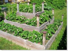 plants for a raised bed Veg Garden, Terrace Garden, Garden Beds, Strawberry Beds, Strawberry Garden, Strawberry Planters, Strawberry Patch, Gothic Garden, Garden Animals
