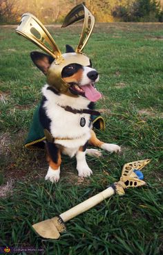 The Avengers Loki Dog Costume // should totally make my Loki wear a doggy costume like this for fun. But then I'd have to slap myself for putting a costume on my dog.