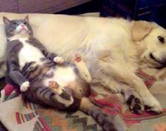 猫をダメにするソファ。それは犬だった。 : カラパイア