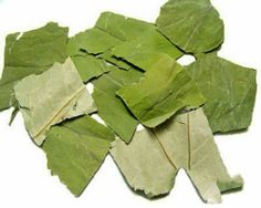 Nelumbo nucifera extract has the effect of curing the dizziness. Nelumbo Nucifera, Perennials, Plant Leaves, Plants, Mango, African, Manga, Flora, Plant