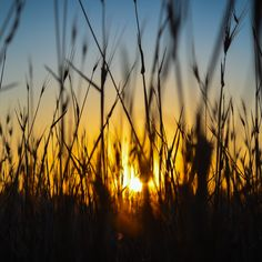 Sunset Through Fields - Optimised for the Retina display - 2048 x 2048 Money Spells That Work, Spells That Really Work, Easy Love Spells, Hd Wallpapers For Mac, Black Magic Love Spells, Retina Wallpaper, Mother Earth, Beautiful World, Fields