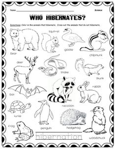 Color in the animals who hibernate and cross out with pencil the animals that do not hibernate. Kids trace the word at the bottom.