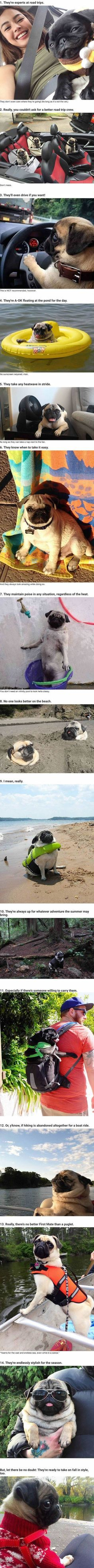 14 Reasons Pugs Are The Ultimate Experts In Summer Living #pug